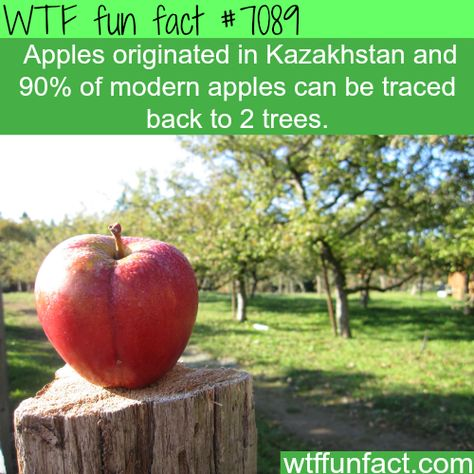 Wtf facts about food