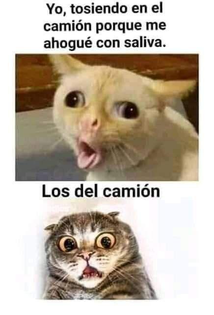 Pin By Magalli On Memes Gatunos Funny Animals Memes