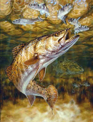 Fish Art Saltwater Fish Spotted Sea Trout Sport Fishing Inshore Fishing Fishing Speckled Trout Art Print 11x14 Fish Prints Speck