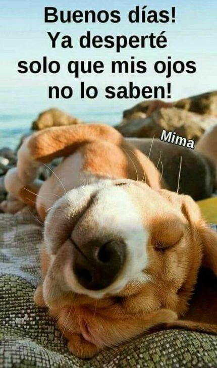 67 Ideas Funny Good Morning Memes In Spanish Funny Good Morning Memes Funny Good Morning Images Morning Memes
