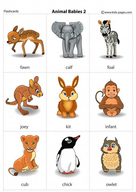Animal Babies 2 Flashcard Baby Animals Kindergarten Flash Cards