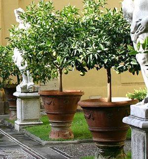 92 Best Pots Terracotta Images Garden