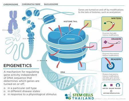 An epigenetics gold rush new controls for gene expression - new blueprint gene expression