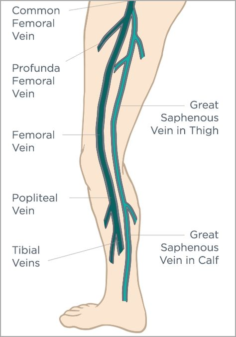 greater saphenous vein - Selo.l-ink.co