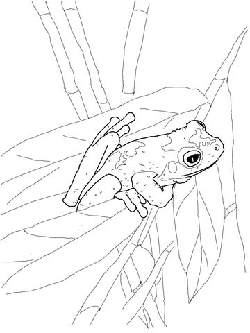 Green Eyed Tree Frog Coloring Page Frog Coloring Pages Red Eyed