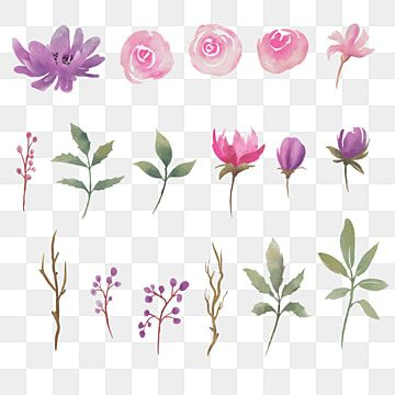Collection Of Watercolor Floral Elements Bunga Udara Kucing Daun Png And Vector With Transparent Background For Free Download In 2021 Watercolor Floral Logo Watercolor Flower Background Pink Pattern Background