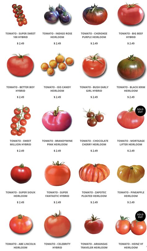 We carry seeds for many Heirloom Tomatoes including Brandywine, Cherokee Purple, Cherry, Pineapple, and Indigo Rose. Our Heirloom Tomatoes are open-pollinated. Types Of Tomatoes, Growing Tomatoes In Containers, Tomato Types, Grow Tomatoes, Heirloom Tomato Seeds, Heirloom Tomatoes, Cherokee Purple, Food Charts, Organic Seeds