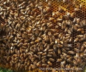 Michigan Honey Bees help farmers and pollinate the trees, flowers and crops. Visit the Michigan Honey Bee Festival in July.
