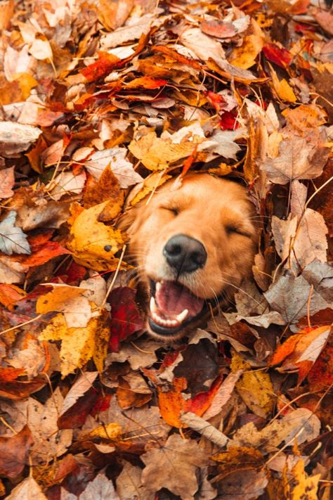 Fall Pictures, Dog Pictures, Fall Dog Photos, Autumn Photos, Best Dog Photos, Amazing Photos, Cute Dogs And Puppies, I Love Dogs, Doggies