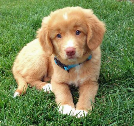 Dogs And Puppies If You Have A Dog Don T Miss This Retriever