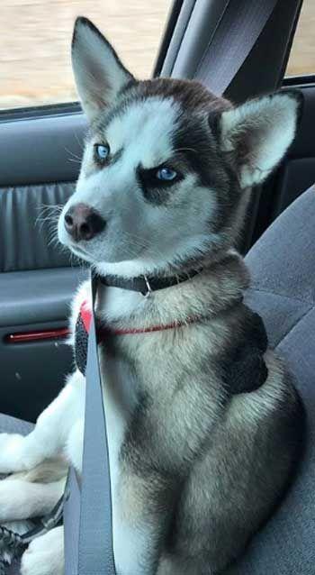Puppies Of Instagram Puppies Gram Instagram Posts Videos