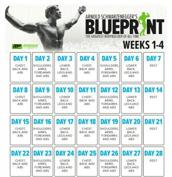 Arnolds blueprint this is officially my favorite workout to arnolds blueprint this is officially my favorite workout to follow bodybuilding pinterest workout gym and workout ideas malvernweather Gallery