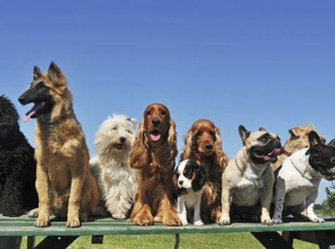 Τάσεις για προβλήματα υγείας ανά φυλή σκύλου