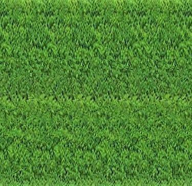 My Un Diagnosis Zoysia Grass Zoysia Grass Care Zoysia Grass Seed