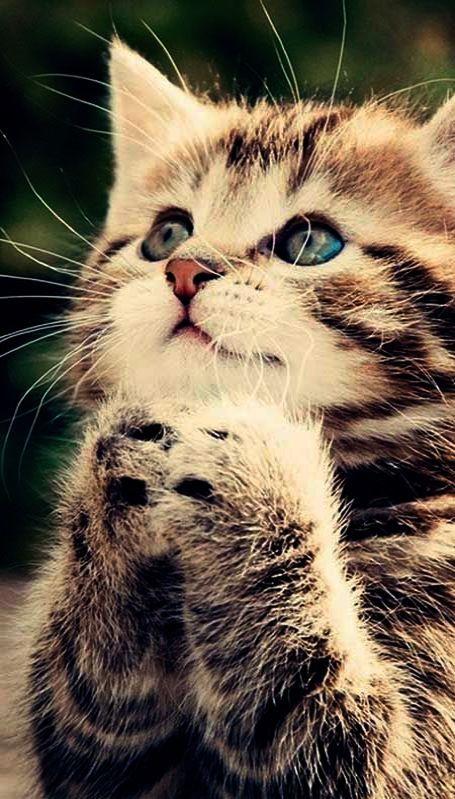 Giddy Porcupine Cute Cat Wallpaper Kittens Cutest Cute Cats