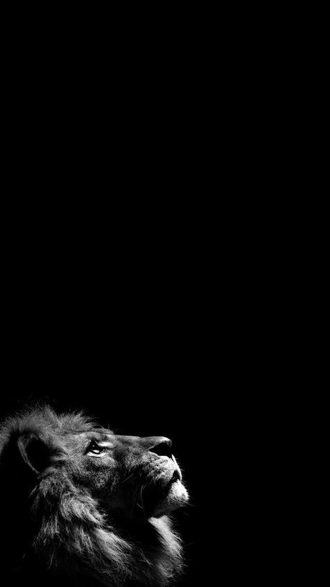 I Made A Few Amoled Wallpapers Lion Wallpaper Iphone Black Wallpaper Black Phone Wallpaper