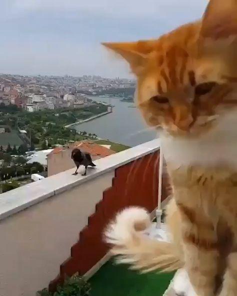Un chat discute avec une corneille