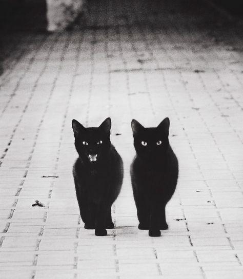 30 photos magiques en noir & blanc illustrant la mystérieuse vie des chats