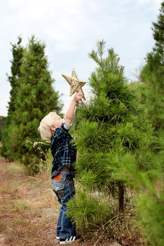 17 Best Tree Farm Pictures Images On Pinterest Christmas Tree  - Location Of Christmas Trees