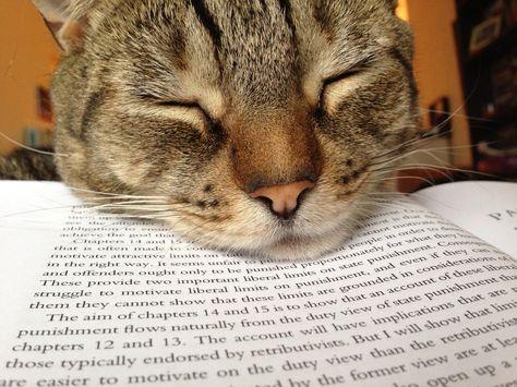 Reading Helper