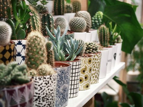 classy pictures of cactus house plants. cacti  black and white pattern planters Indoor Gardening House Plants Pinterest White patterns Cacti Planters