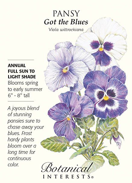 Image Result For Pansy Got The Blues Seeds Pansies Flowers Pansies Botanical Flowers