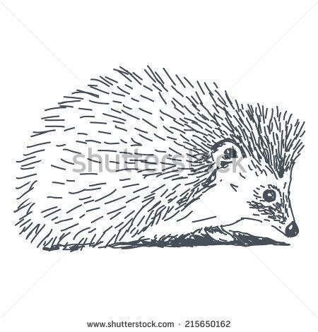 Hedgehog Clipart Black And White 2 450 X 470 Hedgehog Drawing Drawings Basic Sketching