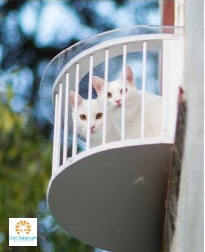 The Cat Solarium Sun Room Package We Know Two Things All Cats Want To Be Outside And They Love Boxes The Cat Solarium Is The Cat Window Indoor Cat Cat Patio