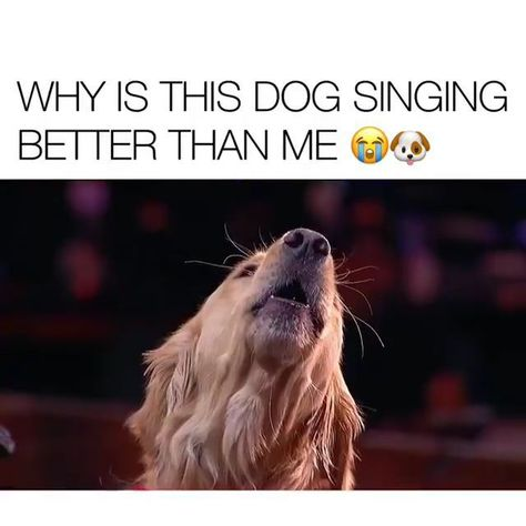 This Singing Dog Brought Tears In Eyes.....