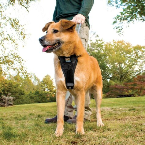 How To Stop Dog From Pulling On Leash Dog Harness Dog Walking Dogs
