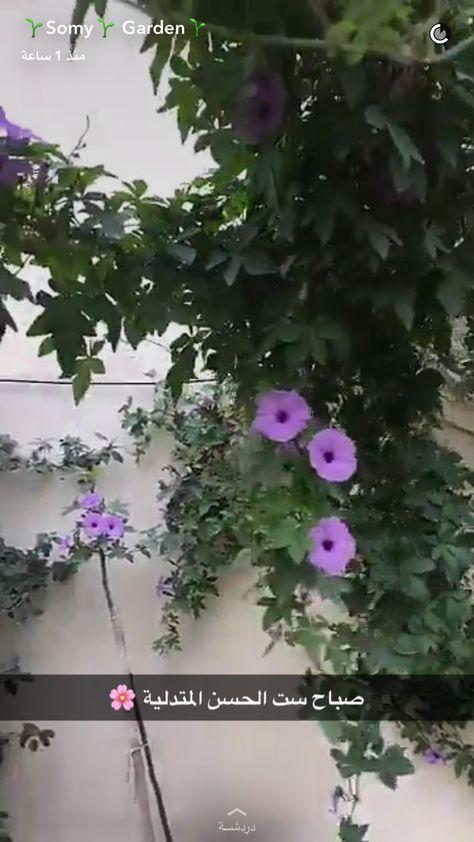 Pin By Hela Saleh On نباتات داخليه Indoor Garden Plants Growing Plants