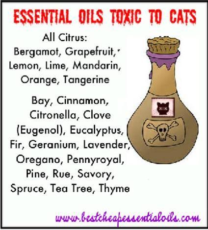 Huiles Essentielles Toxiques Pour Les Chats Et Les Essentiels