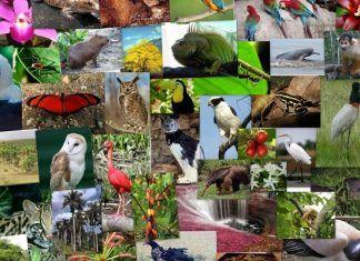 Impacto De La Actividad Humana En La Diversidad De Seres Vivos Medioambiente Medio Ambiente Seres Vivos Conservacion Del Ambiente