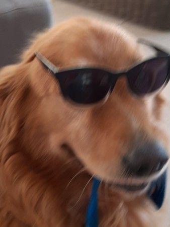 Meme Perro Con Anteojos Perro Con Lentes Perros Fotos De Perros
