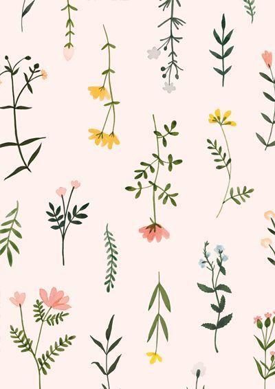 View Minimalist Wildflower Drawing Wallpaper Iphone Background