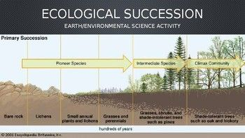 In This Activity Students Will Demonstrate Their Understanding Of Ecologic Successio Environmental Science Activities Science Activities Ecological Succession