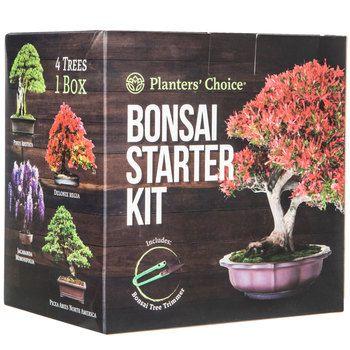 Bonsai Tree Starter Kit   Jeremy Gifts   Bonsai, Craft
