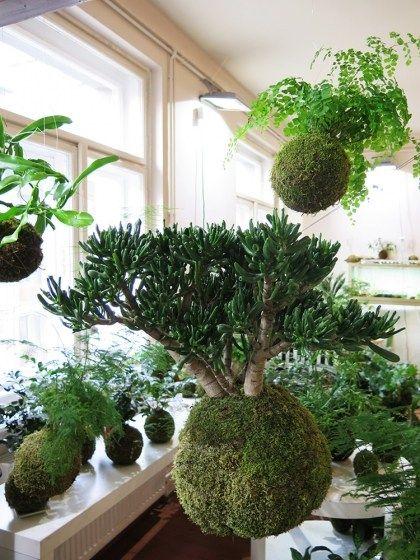 L Art Floral Japonais Kokedama Pour Apporter Une Touche Zen A La Maison Art Floral Japonais Jardin Aquatique Interieur Jardins Suspendus