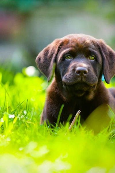 How To Train Your Dog To Stay In An Unfenced Yard Dog Training