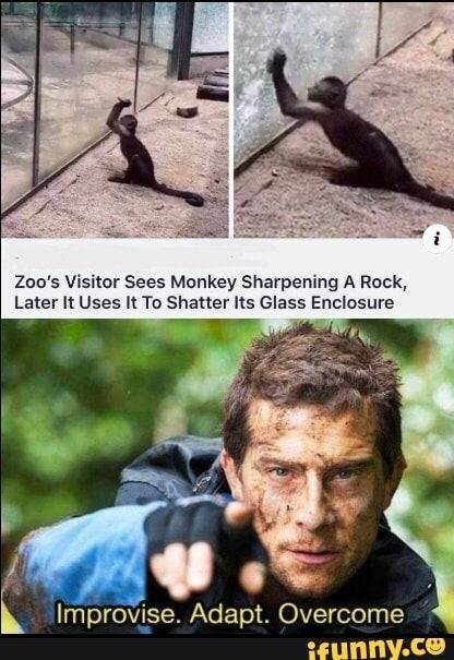 Zoo S Szitor Sees Monkey Sharpening A Rock Later U Uses To