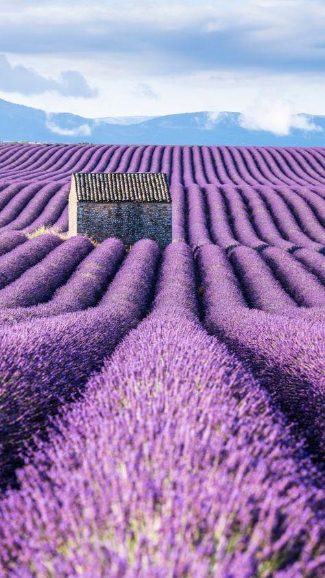 💜 Purple is the new black 💜