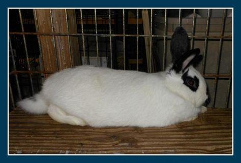 Adopt Roma On Adoption Roma Rabbit