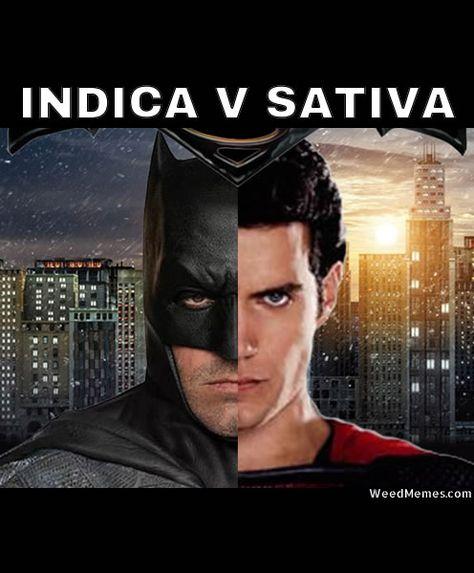 Indica Vs Sativa Meme : indica, sativa, Indica, Versus, Sativa, Ideas, Sativa,, Indica,