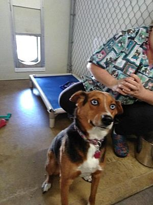 Pictures Of Spirit A Beagle For Adoption In Lagrange In Who Needs