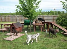Incroyable Dog Playground. Clever!