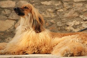 What Is The Oldest Breed Of Dog Dog Breeds Best Dog Breeds