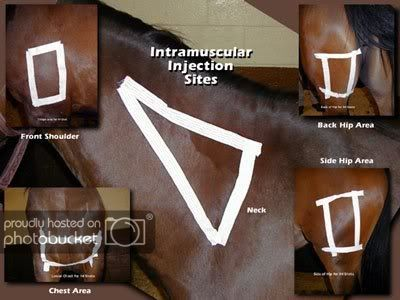 Good reference for IM vaccinations in horses Horse Camp, My Horse, Horse Love, Large Animal Vet, Horse Anatomy, Animal Anatomy, Horse Care Tips, Horse Facts, Horse Training Tips