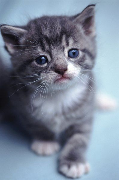 How Big Are 6 Week Old Kittens Pets Kittens Cat Week Cats Kitty Eyes Six Getting Foxx Catnip Pyrethrin Very Sick Pyrethrins Get In 2020 Kitten Care Pets Cute Cats