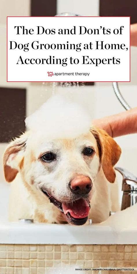 Like their human counterparts, dogs require the occasional pampering, too.