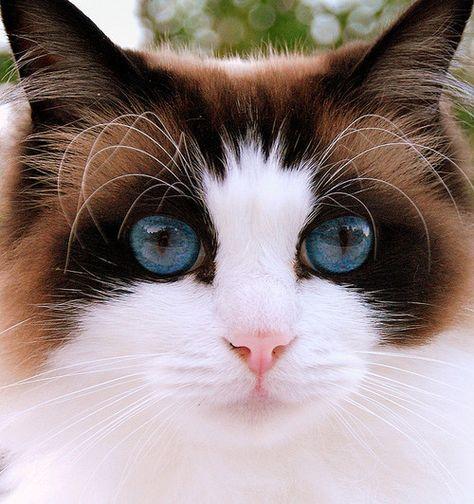 Gorgeous Cat~